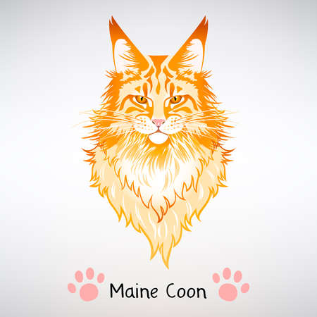 portrait of red cat Maine Coon on a light background