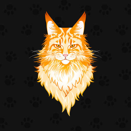 portrait of a red maine coon cat on a black background