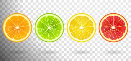 set of citrus fruits from orange, lime, lemon, grapefruit Illustration
