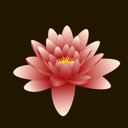 east river: Lotus flower on black background Illustration