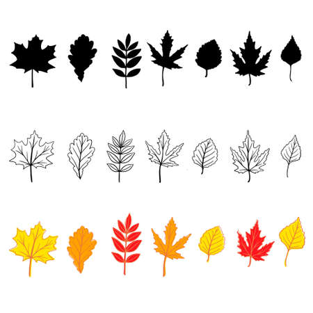 Set of hand drawn fall leaves (maple, oak, birch etc.) isolated on white background 矢量图像