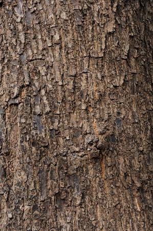 trunk: Árbol de textura