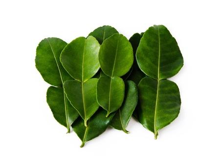 kafir lime: Kaffir Lime Leaves isolated on white background Stock Photo
