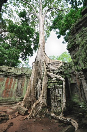 thom: Prasat Ta Prohm. Siem Reap. Stock Photo