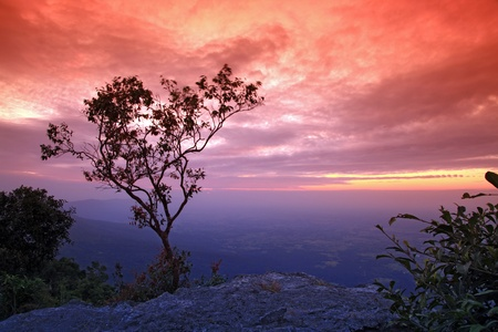 silhouette of tree with beautiful sunset on cliff Stock Photo - 8257833
