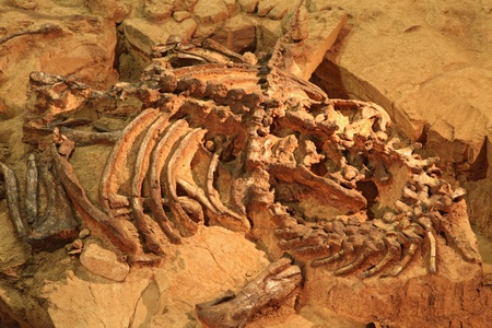 historical sites: dinosaur Fossil at exploration site in Thailand