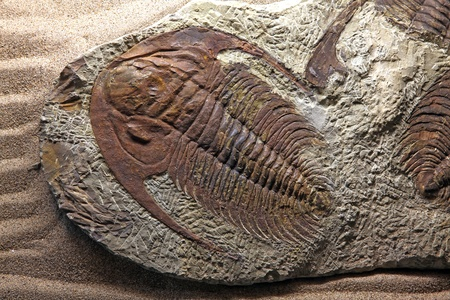 exploration of trilobite beetle fossil embedded in stone Rock photo