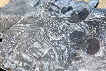 exploration of ichthyosaur fossil embedded in stone Rock photo