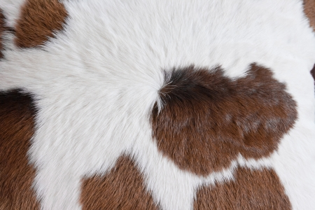 fur carpet with cow skin pattern background photo