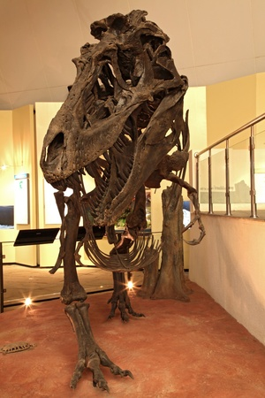 herbivore natural: exploration of dinosaur skeleton in Thailand Editorial