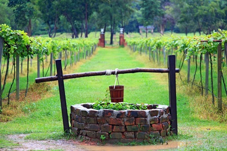 Closeup of  Water well in vineyard Stock Photo