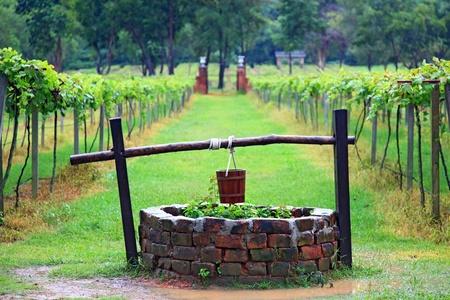 seau d eau: Gros plan d'eau de puits dans la vigne