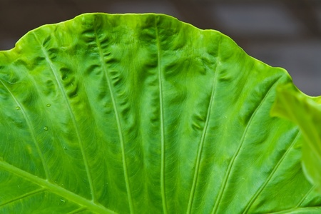 Leaf Pattern photo