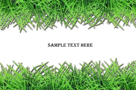 fresh grass frame with space for text photo