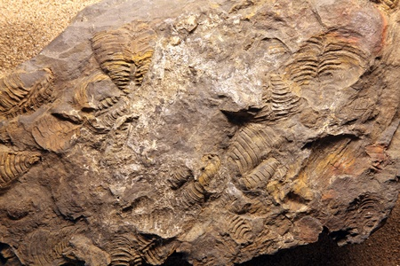 dinosaur Fossil at exloration site in Thailand photo