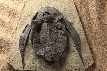 exploration of trilobite beetle turtle fossil embedded in stone Rock photo