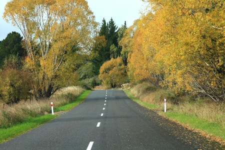 Long road stretching out into the distance with autumn tree in New Zealand photo