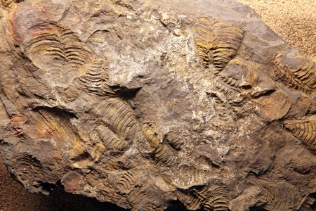 dinosaur Fossil at exloration site in Thailand Stock Photo - 11867030