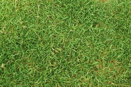 pasto sintetico: Green Nature fresca hierba de fondo Foto de archivo