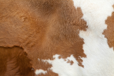 Brown fur carpet with cow skin pattern background photo