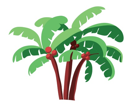 coconut tree: coconut tree isolated on white Illustration