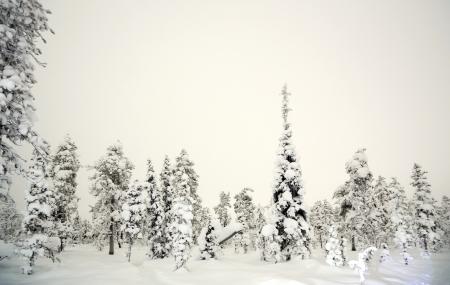 kiruna: Winter landscape at night in Kiruna Lapland forest Sweden