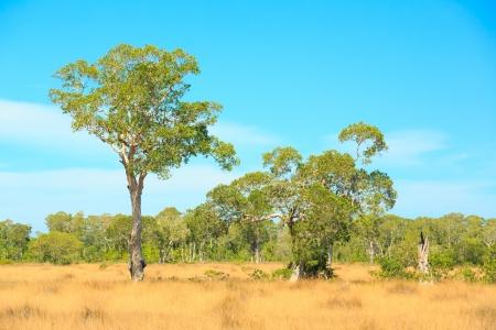africa jungle: Savannah Landscape in Southern of Thailand near Phuket