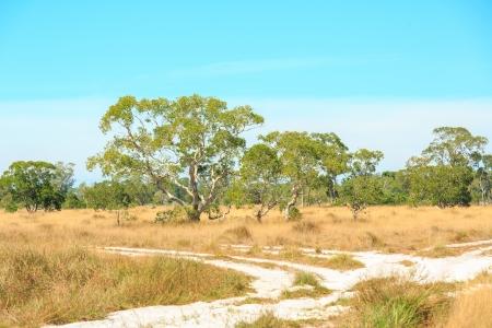Savannah Landscape in Southern of Thailand near Phuket