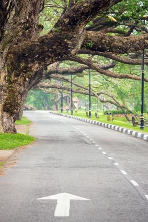 street life: Street in Lake garden at Taiping Perak Malaysia