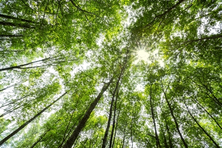 trailway: nature green wood forest trees with sunlight backgrounds. Stock Photo