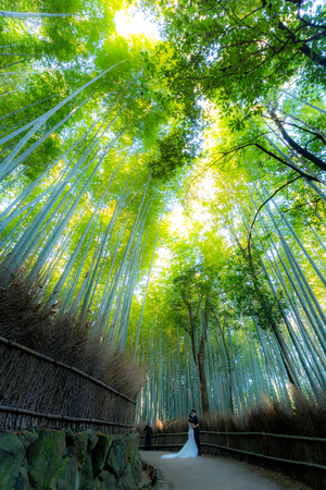 natural wonders: Arashiyama Bamboo Forest in  Kyoto Japan Stock Photo