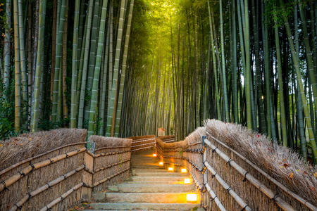 japanese background: Arashiyama Bamboo Forest in  Kyoto Japan Stock Photo