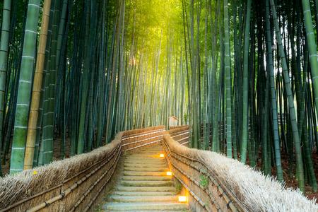 Arashiyama Bamboo Forest in  Kyoto Japan Standard-Bild