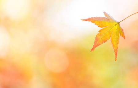 autumn background Red leave with free copyspace Stock Photo