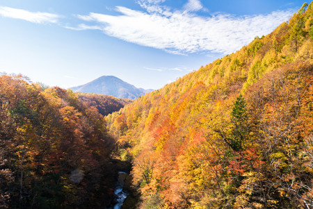 Nakatsugawa gorge from bridge at Fukushima in autumn fall Japan 写真素材