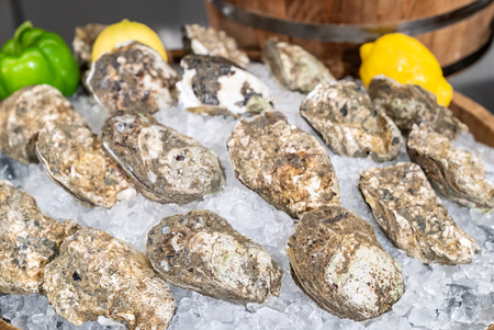 Fresh Oyster in seafood on ice buffet bar Banque d'images