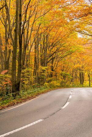 Rural Road through Autumn Fall woodland forest in Aomori Tohoku Japan