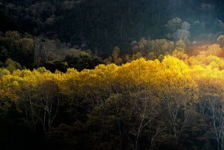 Sunlight on Autumn fall Forest woodlands trees in morning dawn sunrise at Nikko Tochigi Japan