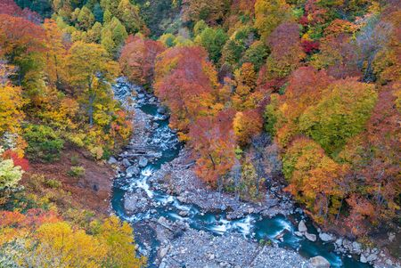 Aerial view of leaf autumn fall season of Forest wodland and river in Akita Tohoku Japan