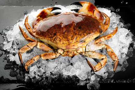 Fresh raw Florida stone crab on heap of ice on black stone plate. Fresh food seafood at market concept. Reklamní fotografie - 157606010