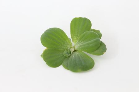 Spawn green on a white background Erickson.