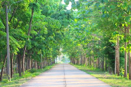 caoba: Muchos bosques verdes están en el lado de la carretera.