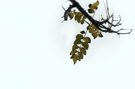autum: yellow leaf falling autum