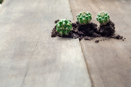 agro: cactus plant with tools and soil Stock Photo