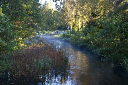 Some guys fishing for salmon in a small stream an early autumn morning Stock Photo