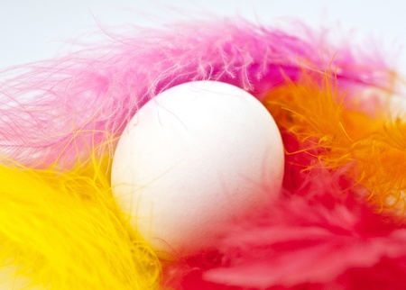 Single Easter egg embedded in colorful feathers