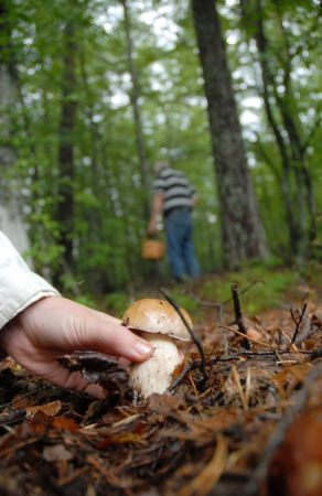 Couple out in the woods looking for mushroom. In the front a female hand picking up a mushroom while the male part keep on serching for more in the background.  Imagens