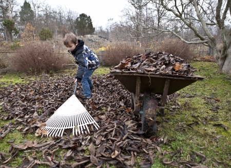 groundskeeper: Young boy raking leaves in the garden