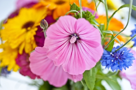 Close up of set of colourful flowers
