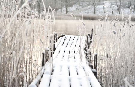 Frozen wooden bridge surrounded by frozen reed Stock Photo